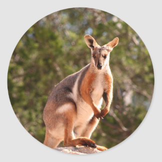 Adesivo Redondo Wallaby de rocha amarelo-footed australiano