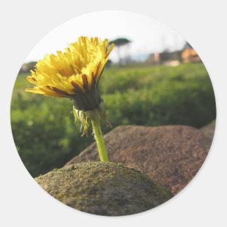 Adesivo Redondo Wildflower amarelo que cresce em pedras no por do