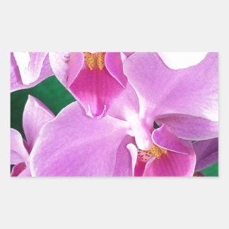 Adesivo Retangular A orquídea floresce close up no rosa