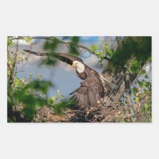 Adesivo Retangular Águia americana que sae do ninho
