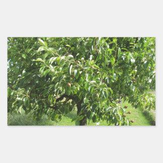 Adesivo Retangular Árvore de pera com folhas do verde e frutas