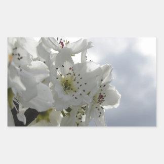 Adesivo Retangular Árvore de pera de florescência contra o céu