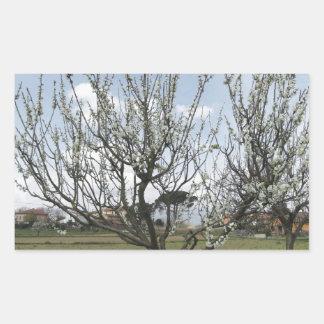 Adesivo Retangular Árvore de pera de florescência no jardim Toscânia,
