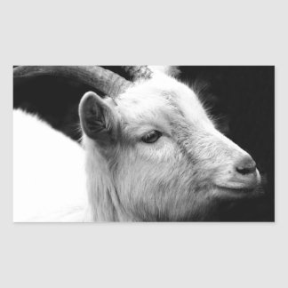 Adesivo Retangular cabra