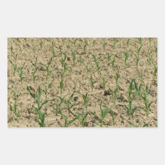 Adesivo Retangular Campo do milho do milho verde na fase inicial