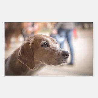 Adesivo Retangular cão