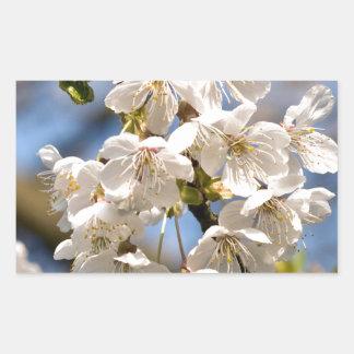 Adesivo Retangular Cherry whites de OM de mero