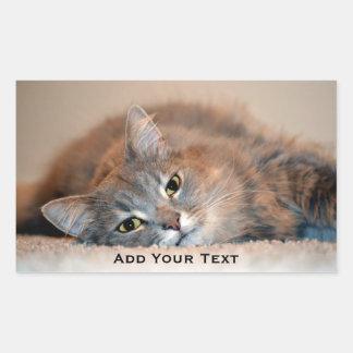 Adesivo Retangular Cinzas, Tan, gato de cabelos compridos branco por