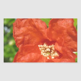 Adesivo Retangular Close up da flor vermelha da romã