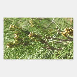 Adesivo Retangular Cones imaturos do homem ou do pólen do pinheiro