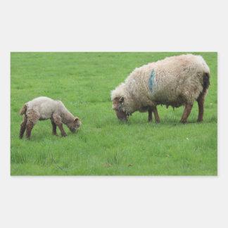 Adesivo Retangular Cordeiro e carneiros do primavera