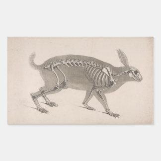 Adesivo Retangular Esqueleto assustador do coelho do vintage