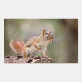 Adesivo Retangular Esquilo vermelho