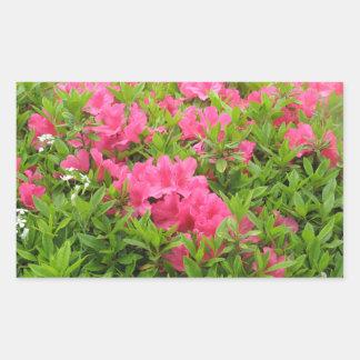 Adesivo Retangular Flor cor-de-rosa do primavera do rododendro