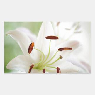 Adesivo Retangular Flor do lírio branco inteiramente aberta