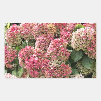 Adesivo Retangular Flores de um hydrangea do francês (macrophyl do