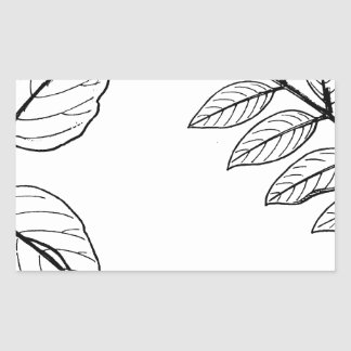 Adesivo Retangular Folhas botânicas do vintage