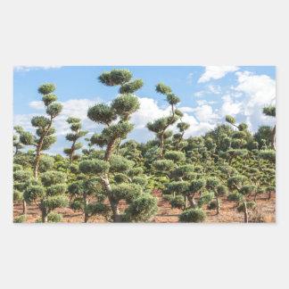 Adesivo Retangular Formas bonitas do topiary nas coníferas