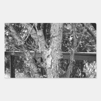Adesivo Retangular Foto preto e branco da natureza da árvore