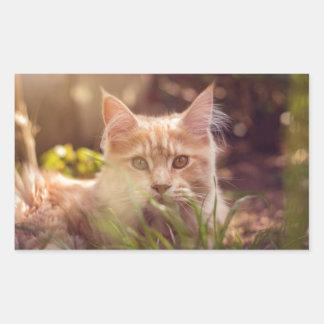Adesivo Retangular gato