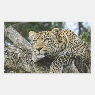 Adesivo Retangular Gato selvagem animal do safari de África da árvore