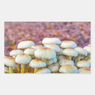 Adesivo Retangular Grupo de cogumelos na floresta da faia da queda