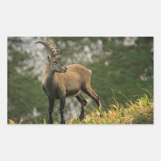 Adesivo Retangular Íbex selvagem alpino, da cabra, ou steinbock