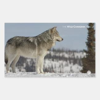 Adesivo Retangular Inverno - lobo
