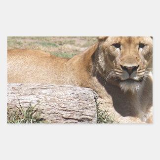Adesivo Retangular Leão