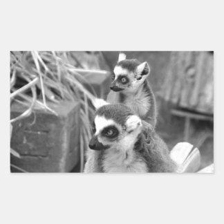 Adesivo Retangular lemur Anel-atado com o bebê preto e branco