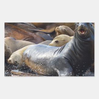 Adesivo Retangular Leões de mar na doca de flutuação em San Francisco