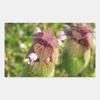 Adesivo Retangular Morto-provocação roxa (purpureum do Lamium) no
