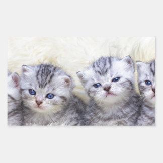 Adesivo Retangular Ninho com os quatro gatos de gato malhado novos em