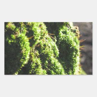 Adesivo Retangular O musgo verde no detalhe da natureza de musgo