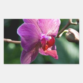 Adesivo Retangular Orquídea mágica