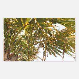 Adesivo Retangular Palmeira da costa leste Myrtle Beach famoso
