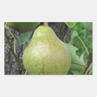 Adesivo Retangular Peras verdes que penduram em uma árvore de pera