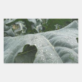 Adesivo Retangular Pingos de chuva nas folhas da couve-flor