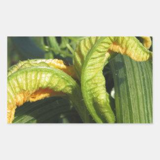 Adesivo Retangular Planta do abobrinha na flor no jardim vegetal