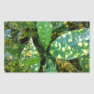 Adesivo Retangular Planta do Croton