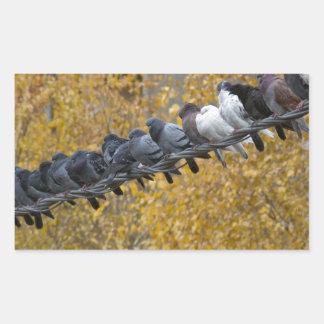 Adesivo Retangular Pombos