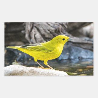 Adesivo Retangular Presentes e acessórios do pássaro da toutinegra