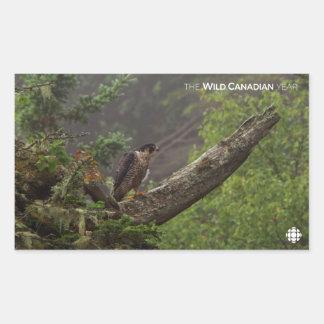 Adesivo Retangular Queda - falcão de peregrino