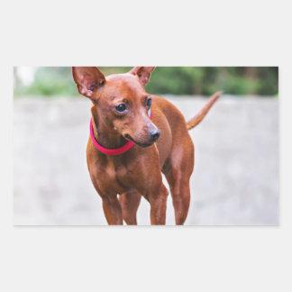 Adesivo Retangular Retrato do cão vermelho do pinscher diminuto