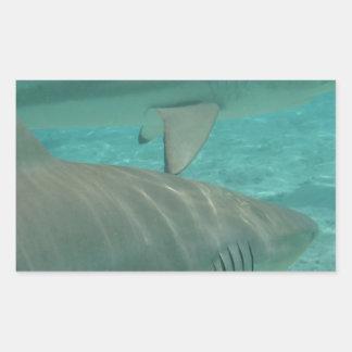 Adesivo Retangular shark