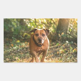 Adesivo Retangular Staffordshire bull terrier