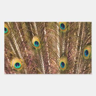 Adesivo Retangular Teste padrão da pena do pavão