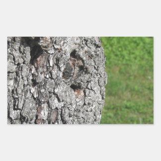 Adesivo Retangular Tronco de árvore da pera contra o fundo verde
