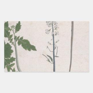 Adesivo Retangular Uma planta de rabanete, uma semente, e uma flor