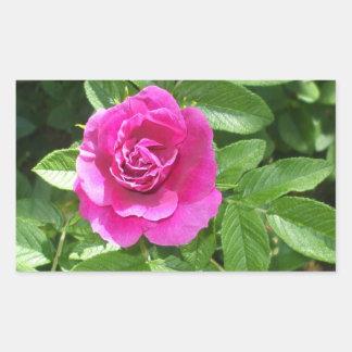 Adesivo Retangular Uma rosa vermelha